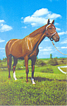 Click here to enlarge image and see more about item p19925: Horse Postcard