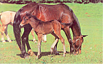 Click here to enlarge image and see more about item p19928: Proud Colt Postcard p19928