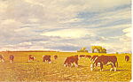 Click here to enlarge image and see more about item p19929: Herefords at Home on the Range