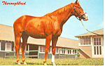 Click here to enlarge image and see more about item p19930: Thoroughbred Horse Postcard p19930