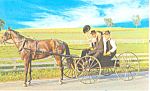 Amish Courting Buggy Postcard p19976