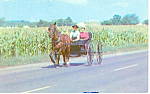 Amish Courting Buggy Postcard p19977