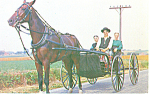 Amish Courting Buggy Postcard p19978