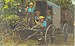 Amish Family Buggy Postcard p19982