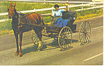 Amish Courting Buggy Postcard p19985