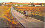 Amish Family Buggy Postcard p19987
