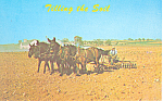 Amish Mules Tilling the Soil Postcard p19994