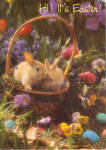Click here to enlarge image and see more about item p20158: Easter Postcard Bunnies in Basket Postcard p20158