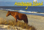 Click here to enlarge image and see more about item p20159: Assateague Island VA Pony p20159