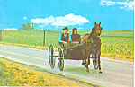 Amish Courting Buggy Postcard p21030