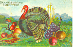 Thanksgiving Greetings Turkey Postcard p21054