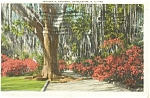 Click here to enlarge image and see more about item p2210: Charleston SC Magnolia Gardens Postcard p2210