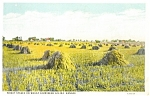Click here to enlarge image and see more about item p2213: Salina KS Wheat Stakes Postcard