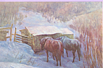 Click here to enlarge image and see more about item p22143: Winter Shelter Pair of Horses Postcard p22143