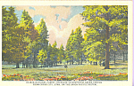 Click here to enlarge image and see more about item p22155: Kaibab National Forest Arizona Union Pacific Railroad p22155