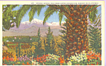 Click here to enlarge image and see more about item p22311: California Orange Groves in Winter Postcard p22311