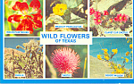 Click here to enlarge image and see more about item p22316: Texas Wild Flowers p22316