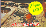 See You Later Alligator Postcard p22382