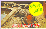 Click here to enlarge image and see more about item p22386: See You Later Alligator Postcard p22386