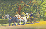 Colonial Coach and Four Williamsburg Virginia p22744