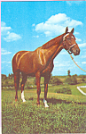 Thoroughbred Horse Alfred Mainzer Postcard  p23013