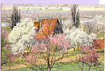 Click here to enlarge image and see more about item p23025: Dogwoods in Bloom Postcard p23025