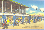 Click here to enlarge image and see more about item p23072: Dog Racing in Florida