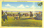 Click here to enlarge image and see more about item p23078: Branding Cattle Out West Postcard p23078
