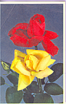 Red and Yellow Roses Postcard p23263