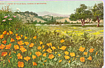 Click here to enlarge image and see more about item p23313: Poppies in Midwinter p23313