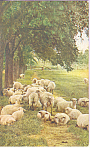 Click here to enlarge image and see more about item p23340: Flock of Sheep Postcard p23340