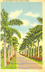 Avenue of Royal Palms Florida p23372