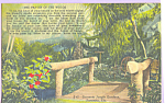 Sarasota Jungle Gardens Sarasota Florida Postcard p23400