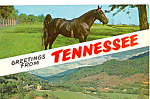 Click here to enlarge image and see more about item p23467: The Tennessee Walking Horse