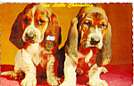 Click here to enlarge image and see more about item p23469: Two Little Characters Basset Pups Postcard p23469