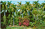 Click here to enlarge image and see more about item p23485: Sunken Gardens St Petersburg Florida Postcard p23485