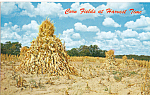 Click here to enlarge image and see more about item p23527: Corn Fields at Harvest Time Postcard p23527
