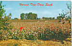 Click here to enlarge image and see more about item p23528: Harvest Time Down South Postcard p23528