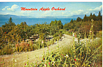 Click here to enlarge image and see more about item p23540: Mountain Apple Orchard Postcard p23540