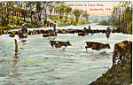 Click here to enlarge image and see more about item p23904: Cattle Scene in the Carney River Bartlesville Oklahoma p23904