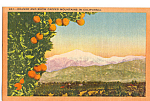 Click here to enlarge image and see more about item p23946: Orange and Snow Capped Mountains,California