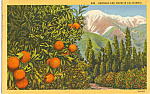 Click here to enlarge image and see more about item p24359: Oranges and Snow, California