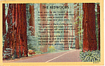 Click here to enlarge image and see more about item p24483: The Redwoods Joseph B. Strauss p24483