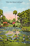Click here to enlarge image and see more about item p24487: McKee Jungle Gardens, Vero Beach, Florida