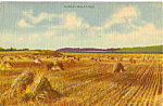 Click here to enlarge image and see more about item p24514: Kansas Wheat Fields Postcard p24514