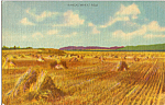Click here to enlarge image and see more about item p24515: Kansas Wheat Fields