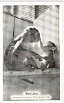 Click here to enlarge image and see more about item p24640: Monkeys at Benson Wild Animal Farm NH p24640