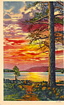 Click here to enlarge image and see more about item p24658: Pine Tree against a beautiful sunset