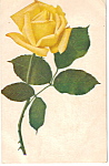 Yellow Rose Postcard p24698