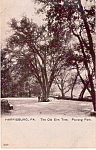Paxtang Park, Harrisburg,Pennsylvania, the Old Elm Tree